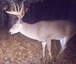 big_deer